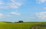 поле,_пшеница,_вс