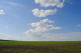 поле,_всходы,_ран