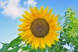 _огород,_цветок,_�