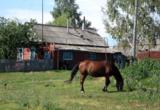 конь_лош�