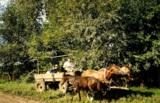 Сельское,_хозяйс