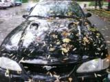 Машина,_автомоби