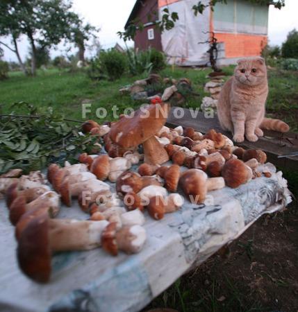 дача,_грибы,_коте