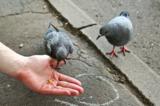птицы,_птица,_гол