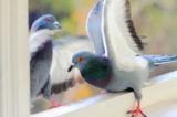 птицы,_фауна,_зве