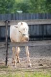 лошадь_конь_заго