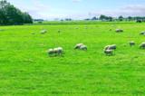 ферма;_дом;_трава