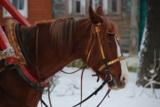 лошадь,_конь,_коб