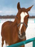 Horse_Jumps_Animal_Mammals_Man