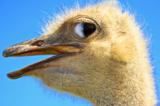 птица,_птицы,_стр