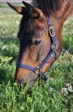лошадь;_конь;_пас