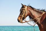 лошадь;_конь;_кор