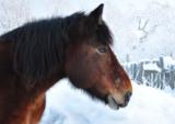 лошадь;_конь;_зим