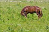 конь,_лошадь,_жер
