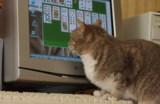 компьютер,_кошка