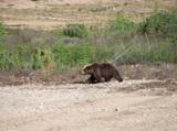 animal_and_flora,_animal,_bear