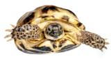 черепаха,_животн