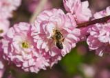 Пчела,_пчела,_оса