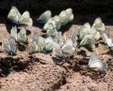 Бабочки,_лето,_ию