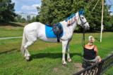 конь_лошадь_бела