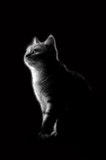 кошка_кот_черно_�