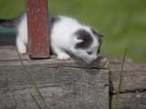 котенок,_маленьк
