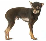 dogs_terrier_animals_puppies_c