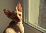 Кошка,_кот,_корни