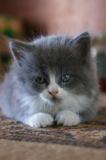 Маленький,_кот,_к