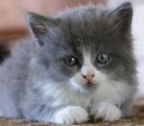 кот,_кошка,_мален