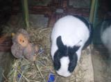 кролик,_заяц,_дом