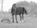 лошадь,_конь,_жив