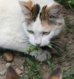 Кошка,_мурка,_жив