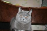 Кошка,_котенок,_п