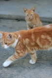 Кот,_котенок,_хво