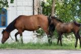 Пастбище,_лошадь