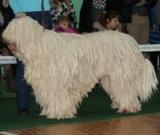 Овчарка,_венгерс