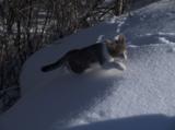 Зима,_снег,_горка