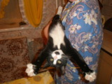 Кот,_дом,_Ñ