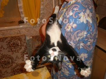 Кот,_дом,_хозяйка