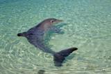 дельфин,_вода,_мо