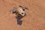 лягушка,_жаба,_зе