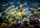 фауна,_рыбы,_живо