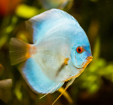 фауна,_рыба,_живо