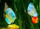 algae_animal_aquarium_backgrou