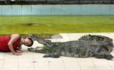 крокодил,_аллига