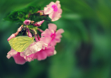 цветок,_бабочка,_