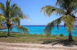 Пальмы,_кокосовы