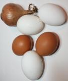 Лук,_яйца,_курины