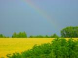 Мир,_поле,_трава,_